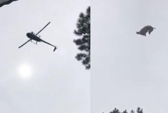 José Ignacio: tiraron un cordero muerto desde un helicóptero a la pileta de un empresario