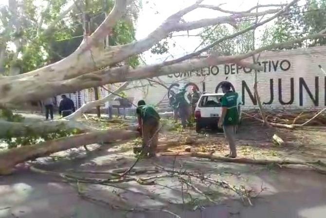 Por el viento, en Capital hubo 21 pedidos de ayuda