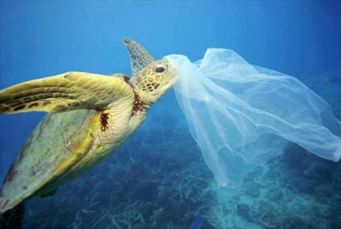 Por qué cada 5 de junio se celebra el Día Mundial del Ambiente